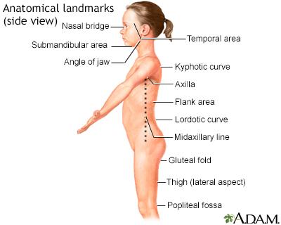 Anatomical landmarks - side view