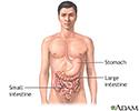 Gastrointestinal anatomy
