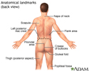 Anatomical landmarks adult – back