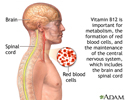 Vitamin B12 benefits