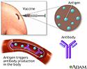 Hepatitis A immunization (vaccine)