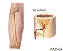 Blood supply to bone