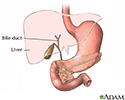 Gallbladder anatomy