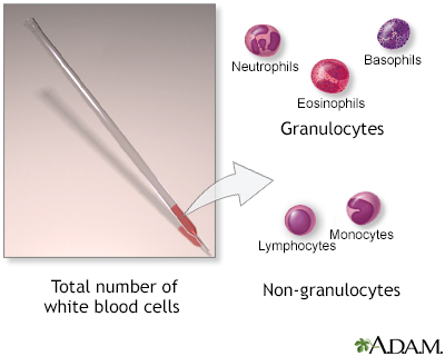 White blood cell count - series