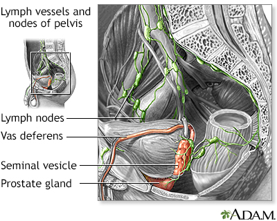 Lymph vessels and nodes of pelvis