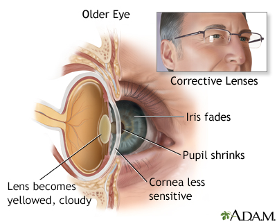 the aging special senses 306 written assignment - special senses lab: activity one: 1 list four sensations detected by the tactile receptors in the skin: (a) pressure.