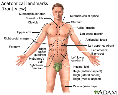 Anatomical landmarks adult - front