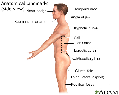 Flank Pain Information Mount Sinai New York