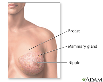 Breast lump removal - series - Normal anatomy