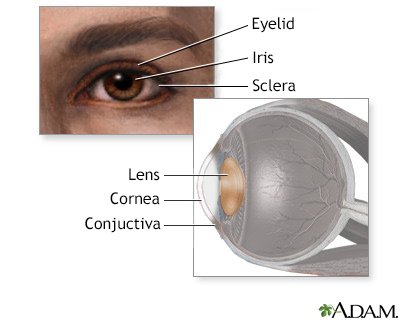 Eye lens anatomy