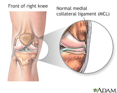 Medial collateral ligament