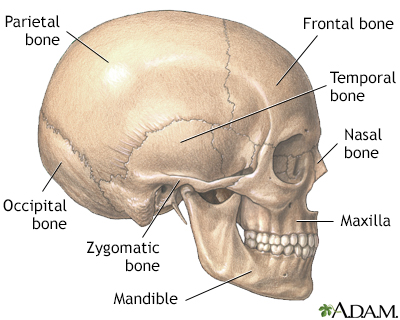 Head And Face Reconstruction