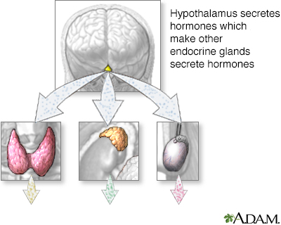 Hypothalamus hormone production