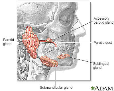 Head and neck glands