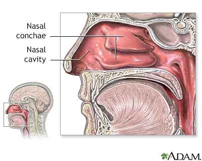 Nasal anatomy | UM Charles Regional Medical Center