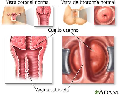 fotos-de-vagina-average-sized-tits