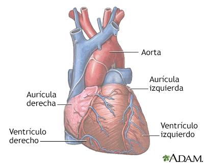Anatomía Normal - Budra