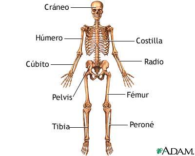 Anatoma Esqueltica Anterior Um Baltimore Washington Medical Center