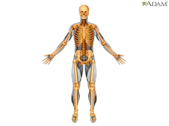 Skeletal System Components Um Rehabilitation Orthopaedic Institute