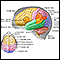 Image for Brain