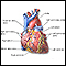 Image for Heart, front view