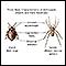 Características básicas de los artrópodos