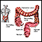Large intestine