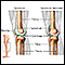 Image for Knee joint