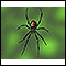 Image for Black widow spider