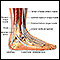Image for Ankle anatomy