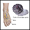Image for Diabetic foot care