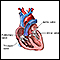Image for Heart valves