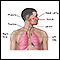 Image for Respiratory system overview