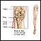 Image for Tibial nerve